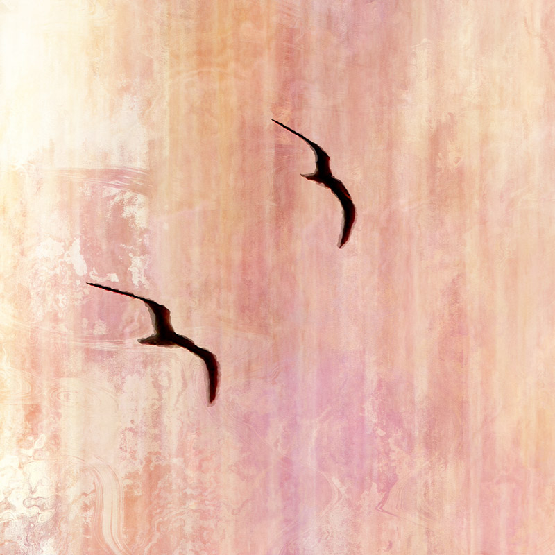 modern abstract canvas art print birds